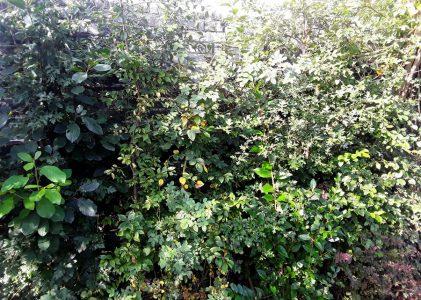 Naar een natuurlijker tuin