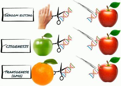 Liveseed: is de bioconsument klaar voor GMO?