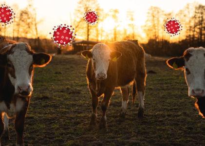 Corona – een alarmbel voor de biologische landbouw