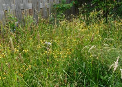 Naar een natuurlijker tuin (3)